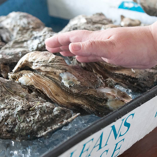 large-oyster-contest